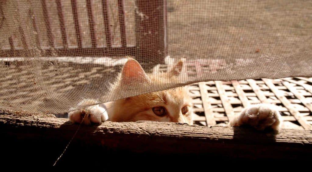 Cat clawing the screen door to get in