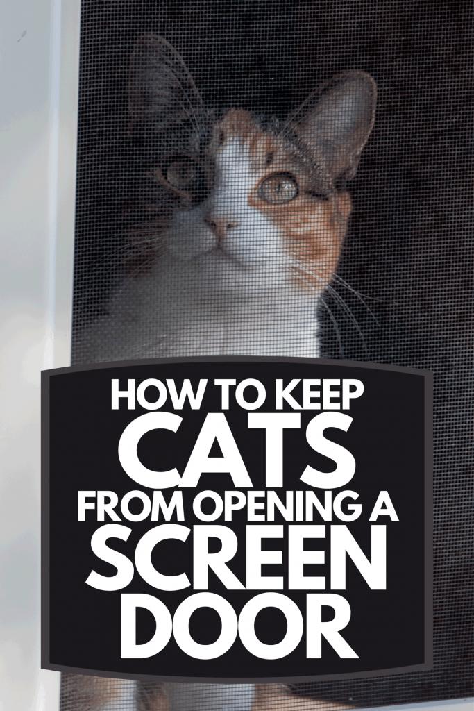 Cat sitting behind screen door, How To Keep Cats From Opening A Screen Door