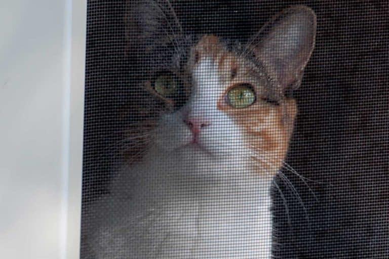 A cat sitting behind screen door, How To Keep Cats From Opening A Screen Door
