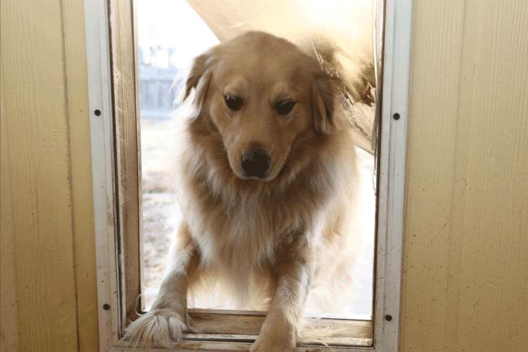 dog jumping through door. How To Keep People (And Dogs!) From Walking Through A Screen Door